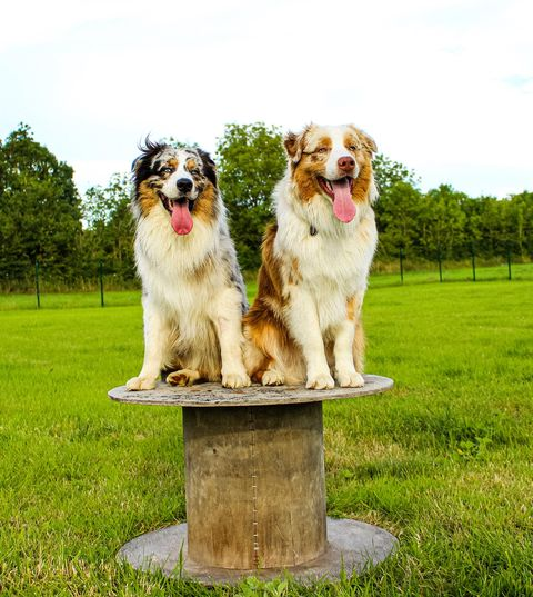 camping-qui-accepte-les-chiens-angles-camping-vendée-animaux-admis