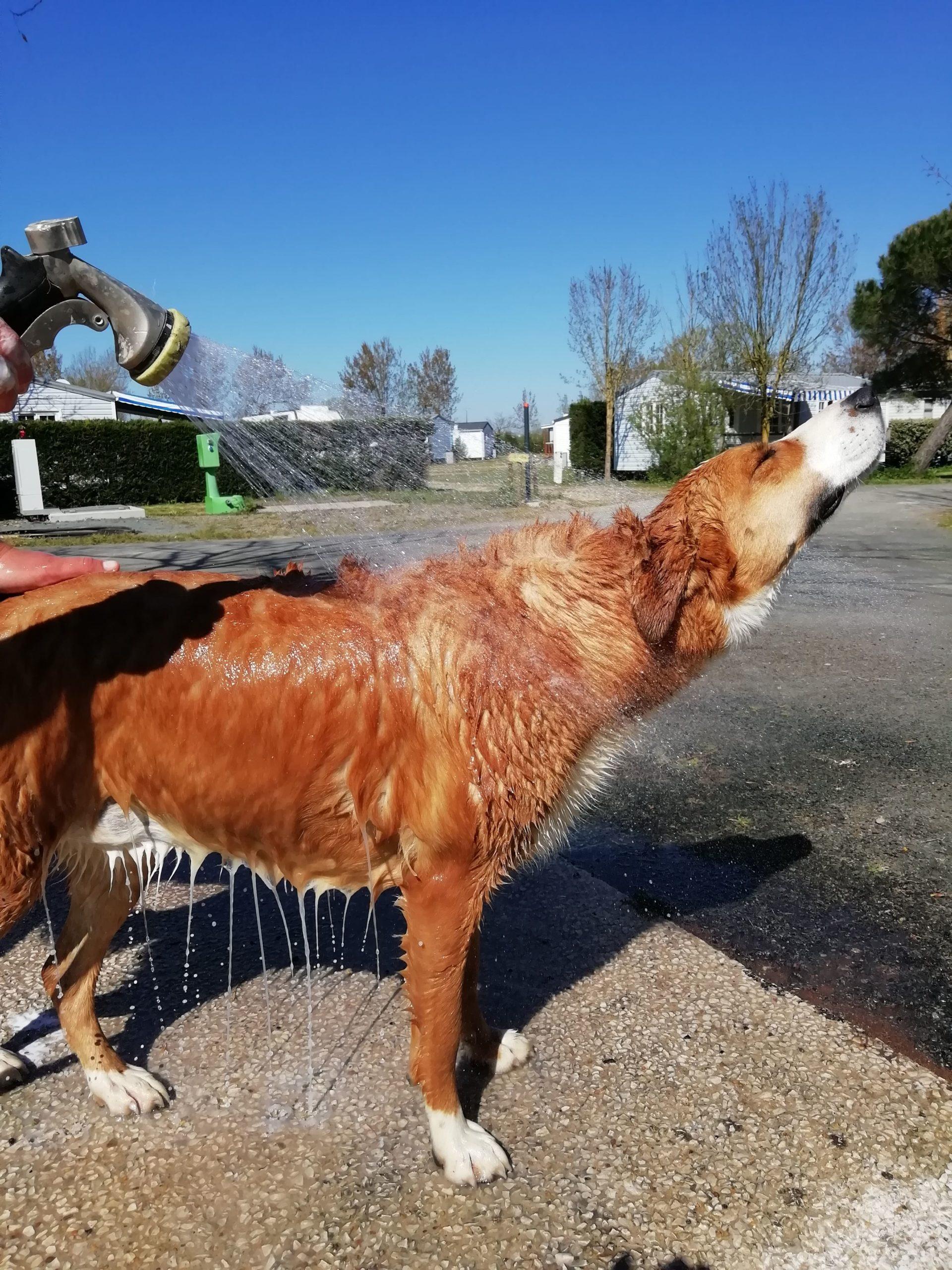 lovely-dogs-toutoudouche2-camping-avec-chien-le-port-de-moricq.jpg