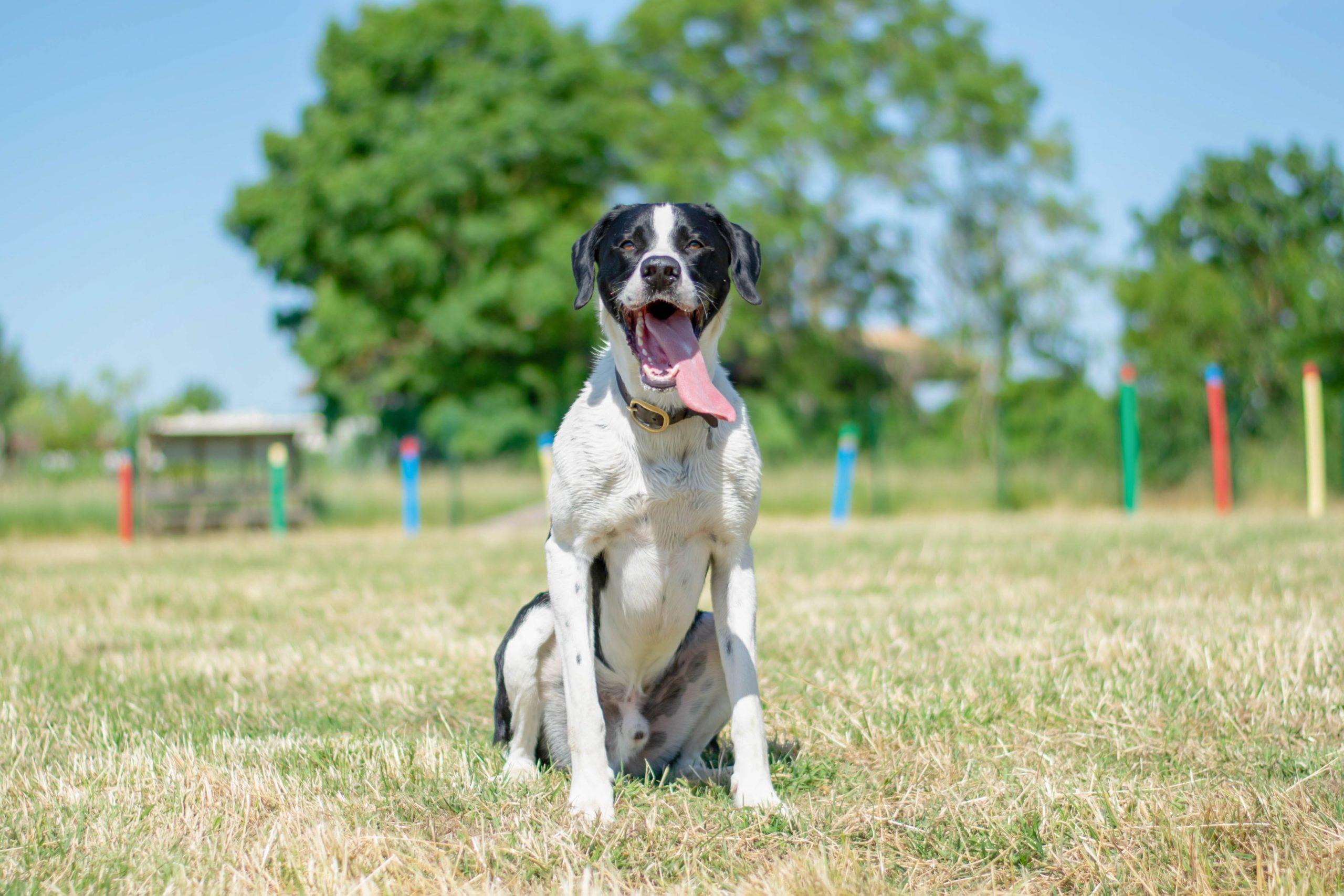 lovely-dogs-toutouparc-camping-avec-chien-le-port-de-moricq.jpg