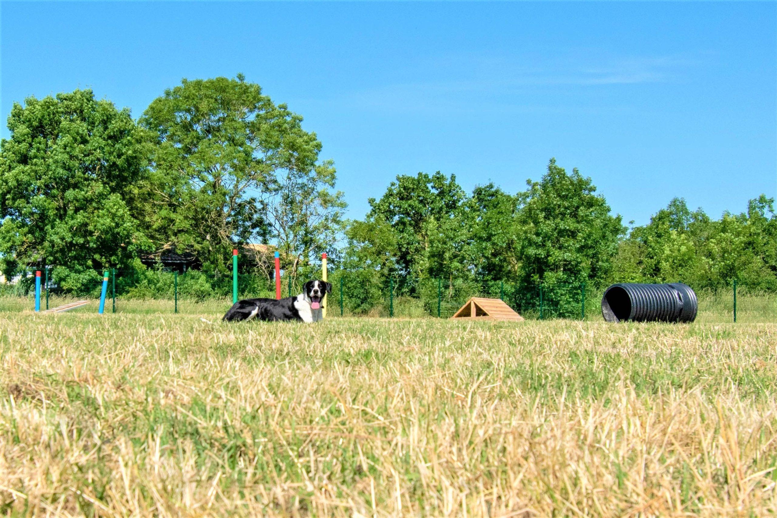lovely-dogs-toutouparc2-camping-avec-chien-le-port-de-moricq.jpg