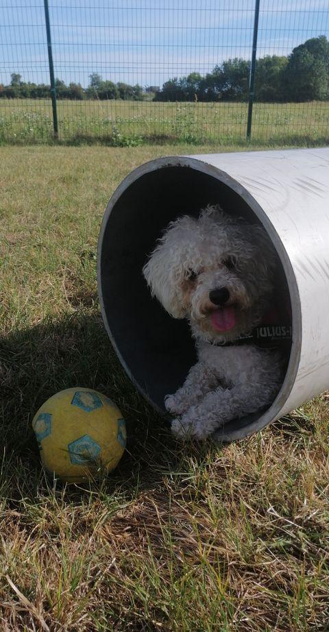 lovely-dogs-tunnel-camping-avec-chien-le-port-de-moricq.jpg